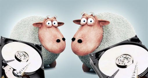 ovelha - teste